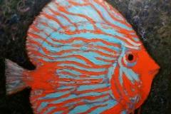 daniel-lambert-poisson-Discus_bleu_et_rouge_ws1037771843